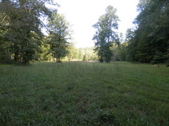 Lower field/pasture