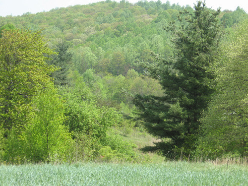 11.83 Acres on Big Cherry Creek - Cherry Creek Road - Meadows of Dan, VA