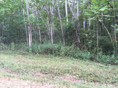 2.28 Acre Tract of Wooded Land - Lot 41 Melmark Acres Trail - Stuart, VA